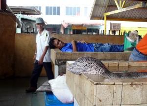 Müd´geschafft auf dem Fischmarkt in Semporna
