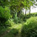 traumhafte Wege an den Reisfeldern entlang im Norden Ubuds