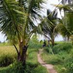 der Weg durch die Reisfelder
